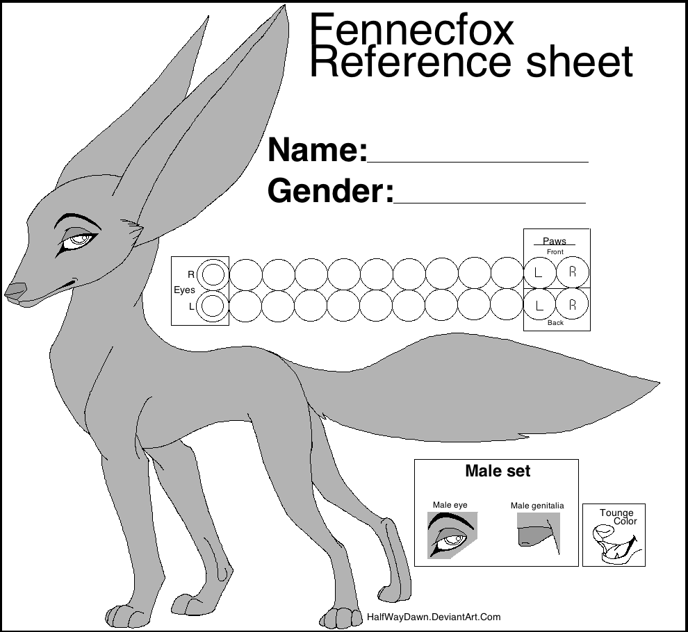 free_fennec_fox_reference_sheet_by_halfwaydawn-d4khhed.png