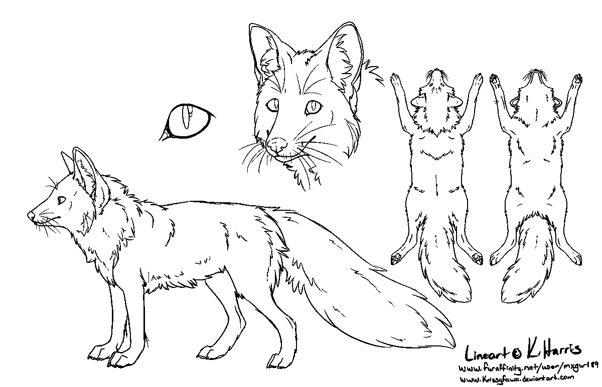 red_fox_ref_sheet___free_use_by_krissyfawx-d338vi9.png