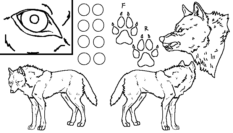 wolf_ref_sheet_by_whitewolfcrisis13-d56mr4h.png
