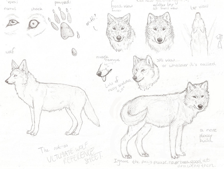 wolf_reference_sheet_sketch_by_ydera-d1kbnbw.jpg